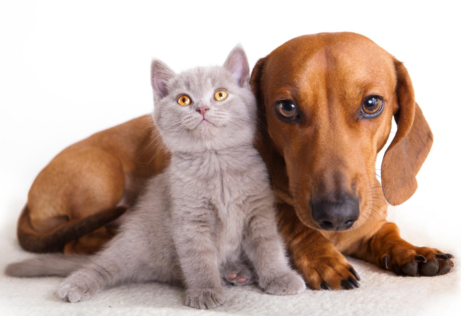 Beneficios-de-tener-una-mascota-en-la-familia-2